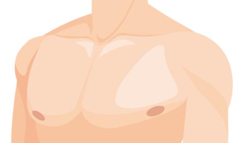 美しい大胸筋の画像